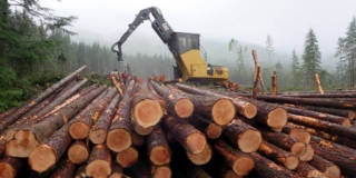A pile of logs with a crane in the background