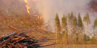 A small fire burns up a hill behind a small stand of trees.