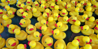 A picture filled with yellow rubber ducks with orange bills floating on water.