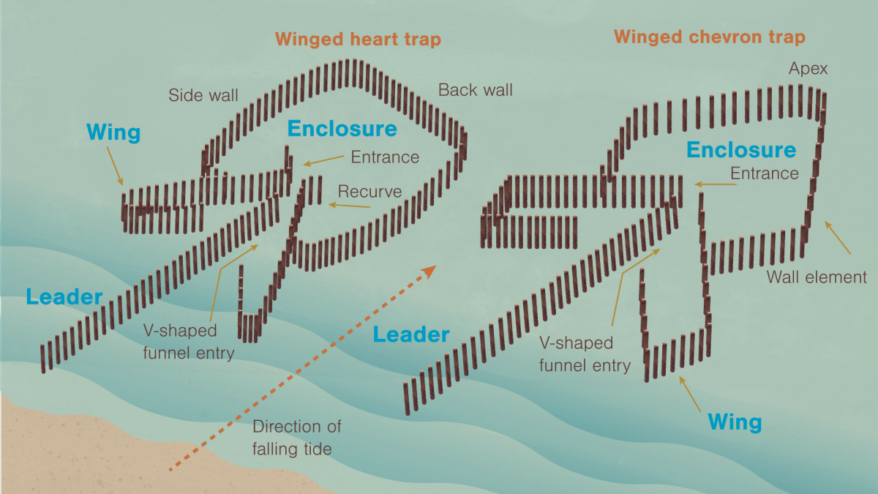 Illustrations of the heart-shaped and chevron-shaped fish traps.