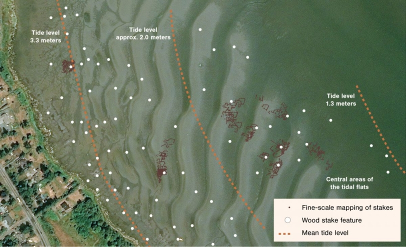 An aerial photo of the Comox Harbour shore with outlines of the different fish traps Nancy Greene mapped.